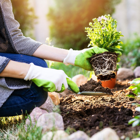 Gardening Tips,real estate developers in lucknow